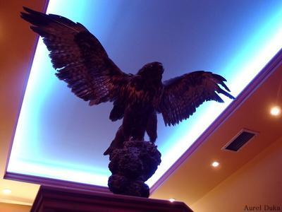 albanie le pays des aigles