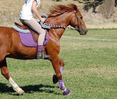 Un emsemble violet taille poney petit cheval :)