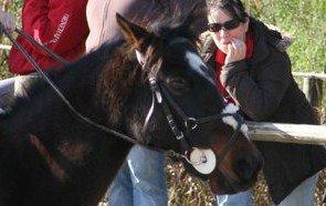 Filet muserolle croisée taille poney petit cheval