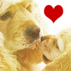Photo de Dogs-and-Love