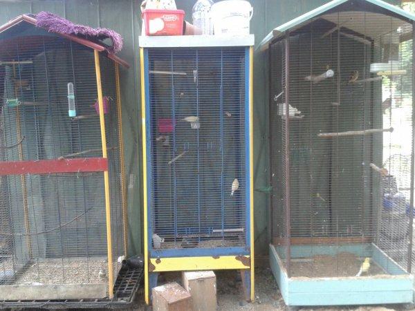 Je me suis fait un régal à l'élevage de canari cette année