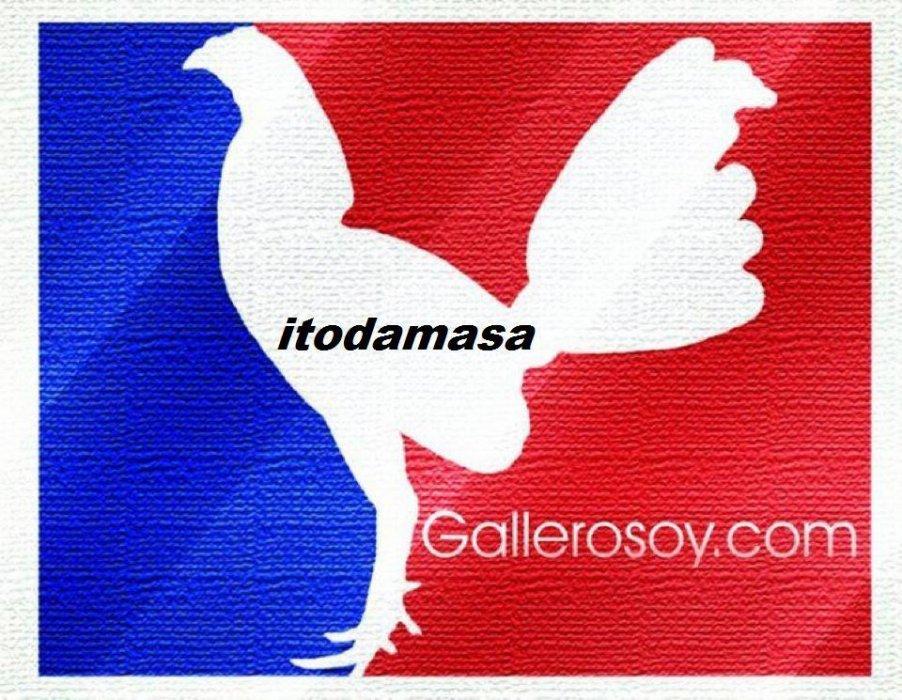 itodamasa.  criador de gallos en francia sam et zak à la gestion du blog