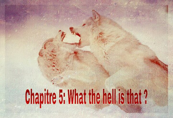Chapitre 5: What the hell is that ?