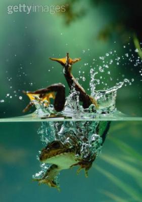 ... imagine cette petite grenouille bien innocente ...