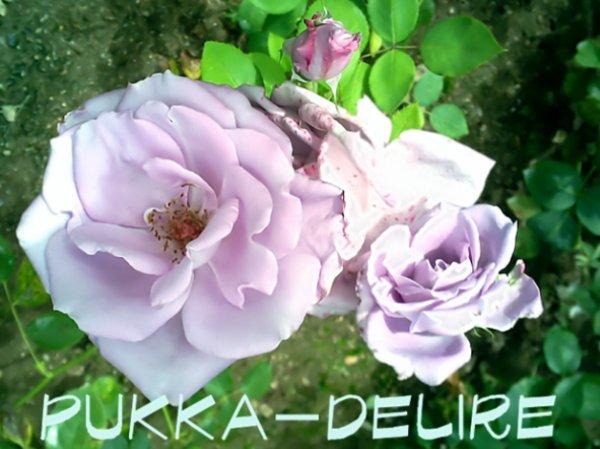rose =)