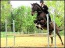 Photo de Equestrian-Dreams