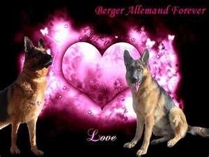 (l)Berger Allemand Forever(l)