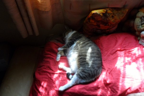 déjà 34 semaine que tu es partie mémère - Hommage as mémère une de mais chatte décède