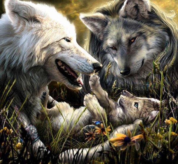 belle  image deloup  cadeaus  de nadia  mon ceurs ke jaime enormeman  mersi gros bisous  du loup blanc
