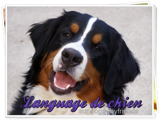 language de chien