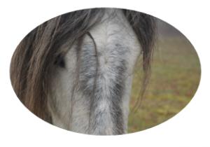 ~ Un cheval n'a pas besoin de bride, juste d'un référent qui le comprend ~