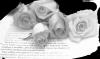 ಌ⋰⋱ಌ⋰⋱ಌ    J'attise Les Convoitises  nos 25 ans de mariage   ಌ⋰⋱ಌ⋰⋱ಌ