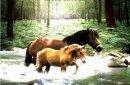 Photo de cheval-amour-eternel