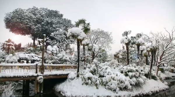 ~DLP sous la neige 2~