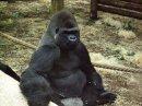 Photo de Mes-visites-de-zoos