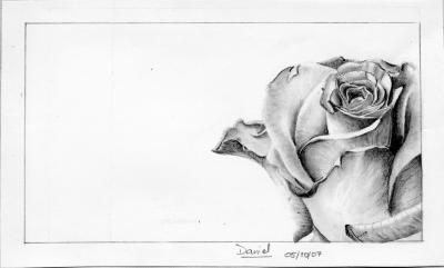 Rose Dessins De Daniel