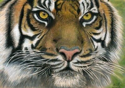 T te de tigre dessins de daniel - Dessin de tigre facile ...