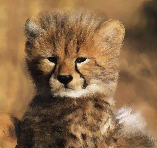 Petit guépard