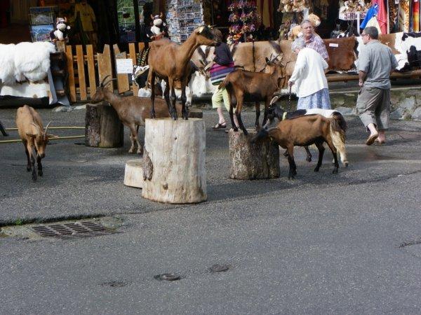 Village des chèvres (les Lindarets Haute Savoie )