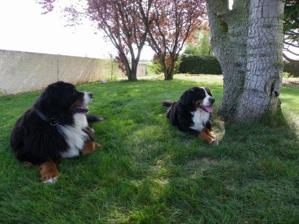 Repos cette après midi , enfin pour les chiens uniquement  ..!!