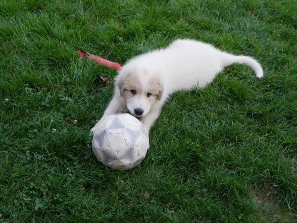 trois mois et déja fan de foot