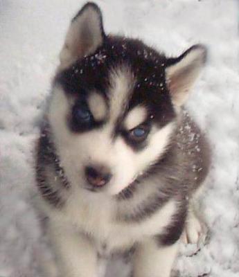 Animal humain etres vivants vous voulez un monde sans haine sans - Image bebe chien ...