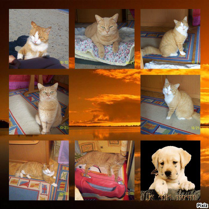 Blog de minette-3103