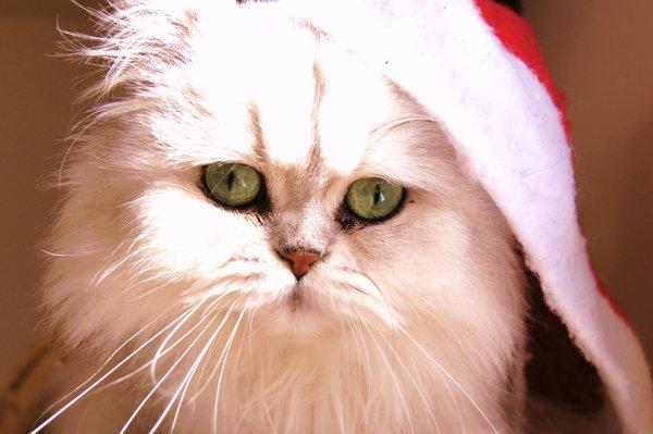 Les heureux vous souhaites un Joyeux Noel et de bonne fêtes de fin d'Année