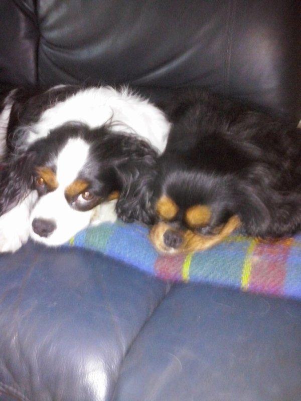 Esmée et Bella sur le canapé