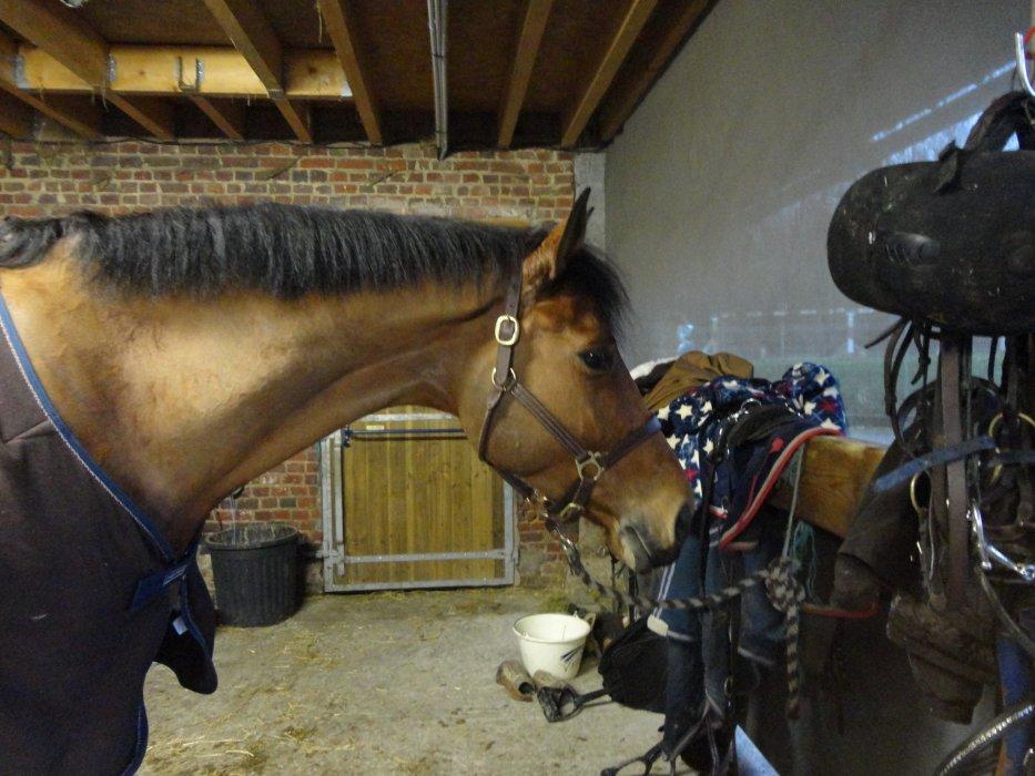 """Monter à cheval transforme le """"je voudrai"""" en """"je peux"""" ♥"""