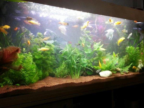 Arriver des poissons