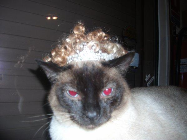 mon chat en folie !!!!! trop drole