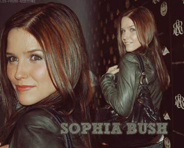 ___ | __ LES-FRERES-SCOTT182 __Article # 05 :__ Sophia Bush ; notre héros de OTH .  ____________________________________________ ___ | __ Posté le : 03 Janvier 2009 | Creation | Decoration | Inspiration de titre