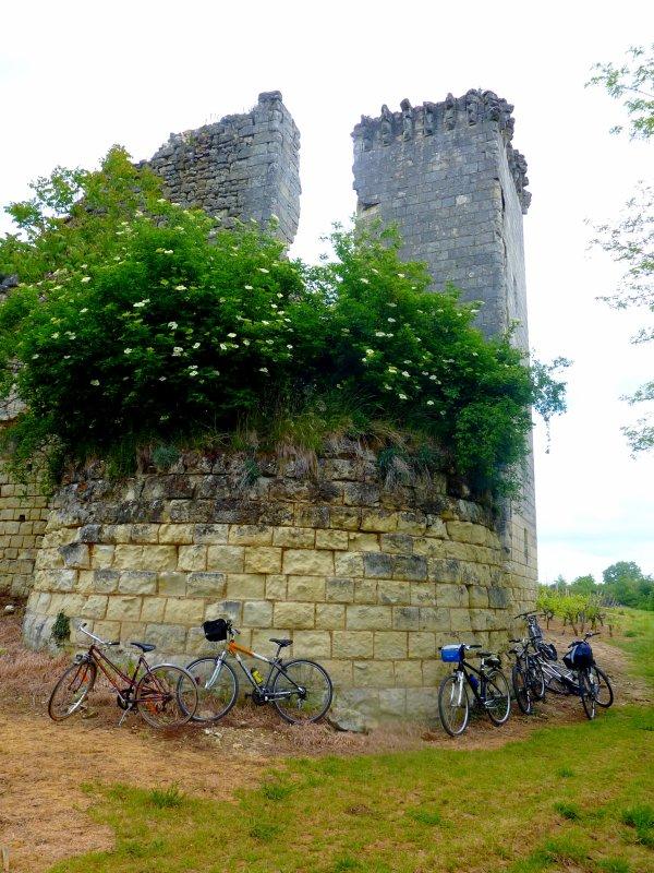 Des vignes, un pique-nique mémorable et des vélos !