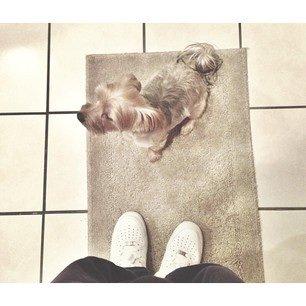 Prince And His Dog !!