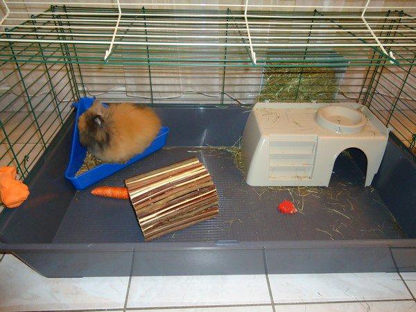 Choisir la bonne cage , entretien et emplacement.