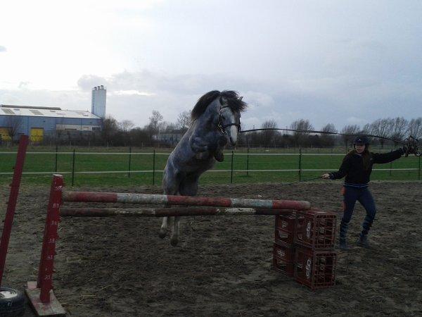 le poney de compet !!!!