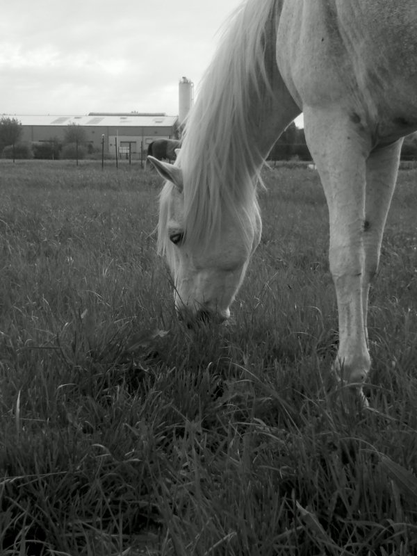 poney !!! toi qui ma tan donne comme je pourrai te dire que j 'aime  quelqu'un d'autre ?!!