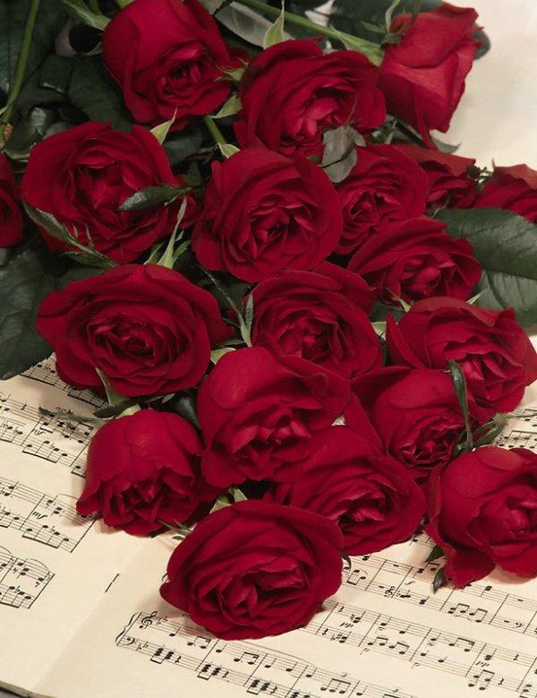 """J'ai de la peine , sincèrement , ça fait mal, le """" départ""""  vers un endroit """"meilleur""""""""   d'une amie de blog, (pas encore la cinquantaine)  meme   cette  l'amitié est    """"virtuelle"""" elle est bien réelle, la  preuve; j'ai le coeur triste pour sa famille,pour son absence,pour le vide éprouvé à cette nouvelle, ces fleurs sont pour ELLE   et pour vous, ,je sais que dans  mes ami(e)s certaines savent qui est cette personne, ils sont aussi amies de blog avec,.Je sais que notre amitié à tous est forte et sincère , , alors gros  kissssssssssssssssssssss"""