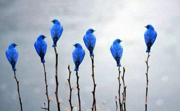 Oiseaux haut perchés...