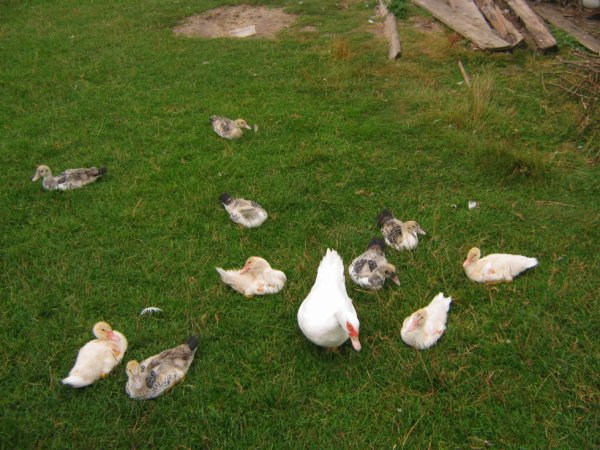 Oiseaux divers vers chez moi...