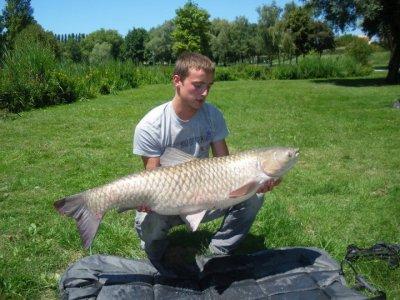 Amour blanc 16,500 kg