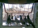 Photo de pigeon-laayoune-sakia