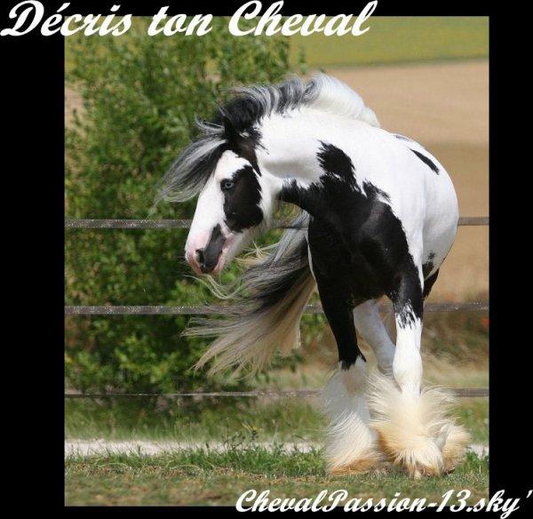Décris ton Cheval...