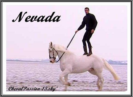 Nevada, le cheval aveugle