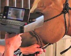 l'identification des chevaux par l'iris !