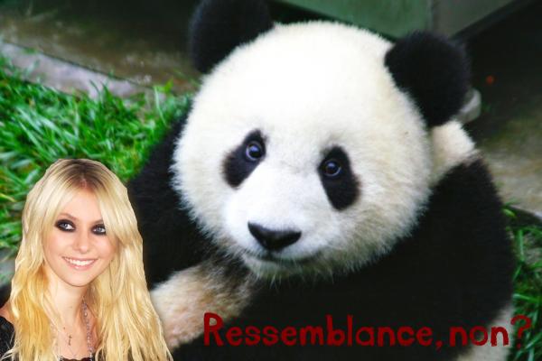 J'ai toujours trouvé que Taylor me faisait penser à quelque chose. Et voilà, j'ai trouvé ! Un panda ! Eh oui, vous ne trouvez pas ? Avec ses cercles noirs autour des yeux là .. Ressemblance frappante !