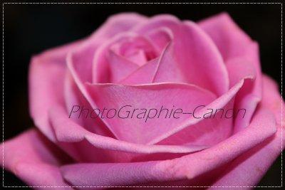 Article 2 : « Derrière.une.fleur.se.cache.le.bonheur »