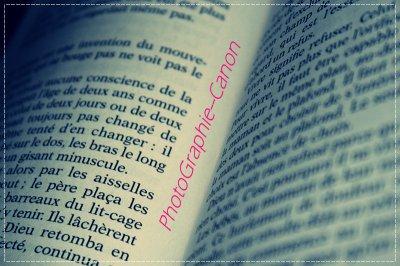 Article 4 : « Tout.est.écrit.dans.un.Livre »