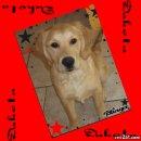 Photo de concours-de-chiens-57680